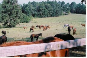 Ranchmares.jpg